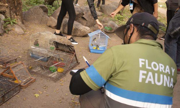 <span style='color:#020c7e;font-size:15px;'>Rescate de especies del comercio urbano</span></br>Liberan 18 aves autóctonas en la ciudad de La Rioja