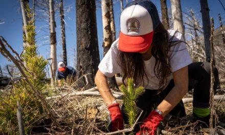 <span style='display:inline-block;line-height:1rem;color:#1B849E;font-size:15px;'>En el sector norte del Parque Nacional Lanín</span></br><span style='color:#333333;font-size:22px;'>Plantan árboles nativos para restaurar un bosque incendiado</span>